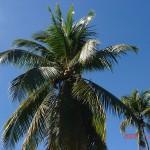 a22 w górę-błękitne niebo i palmy