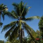 a23 i trochÄ™ niĹĽej teĹĽ palmy