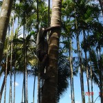 z2 wiÄ™c chop na palmÄ™ po kokoska